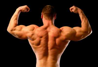 how to develop back muscles